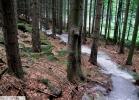 Rychlebske stezky - Trail Velryba